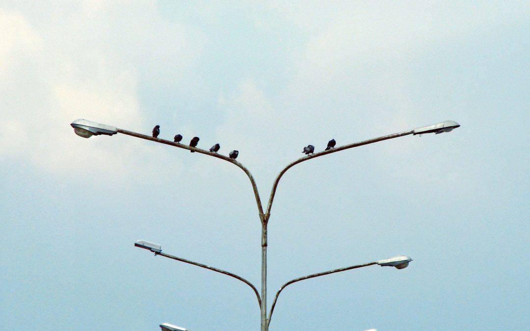 Birds On A Lightpole