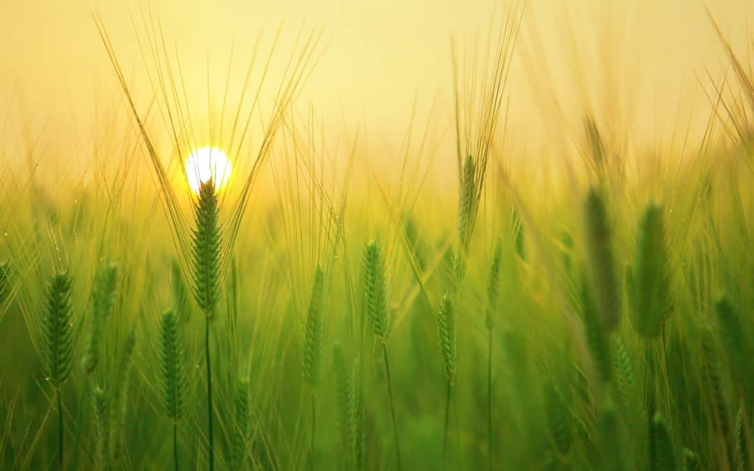 Green Field with Sunrise