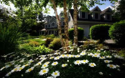 Nice Home with Daisies