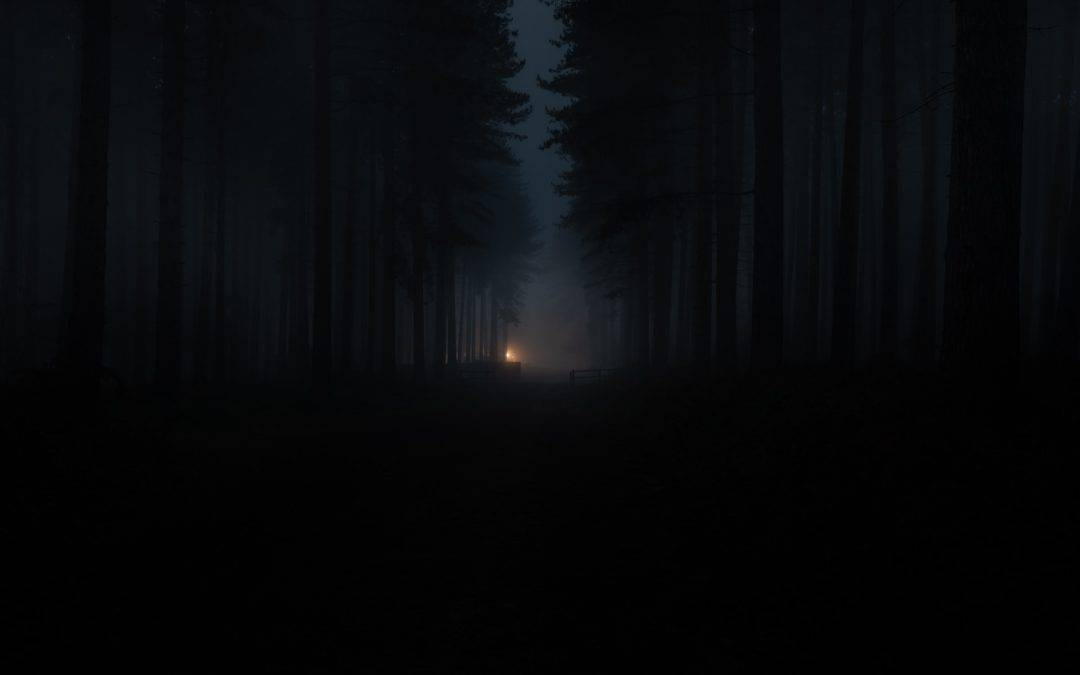 Campfire Woods Forest Fog Night