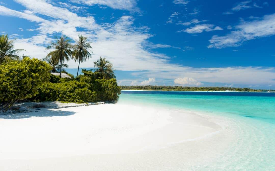 Island Ocean Palm Tree