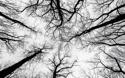 Trees Pointing Towards the Sky