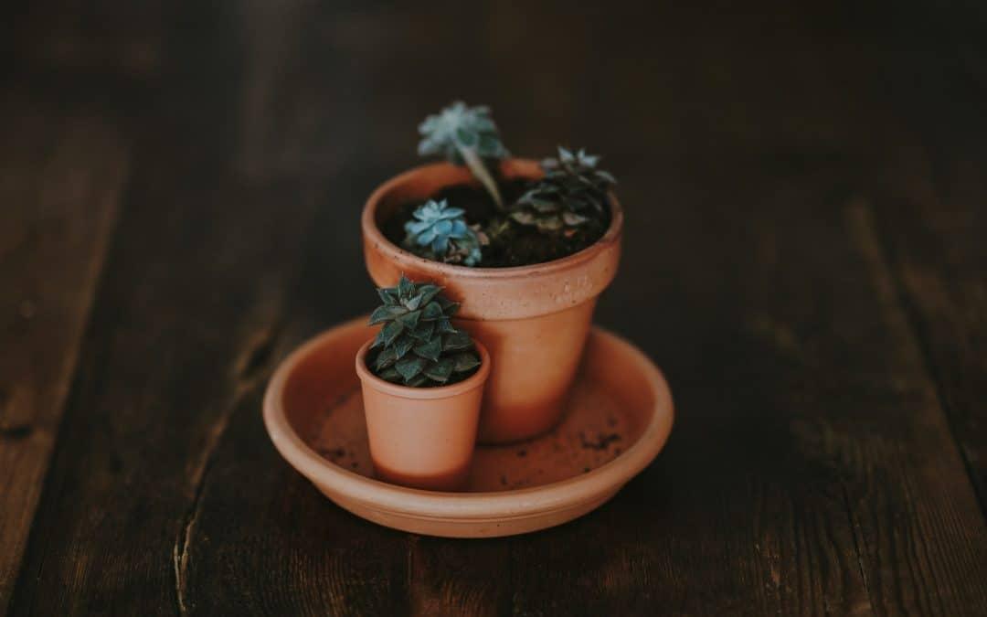 Big and Small Pot Plant