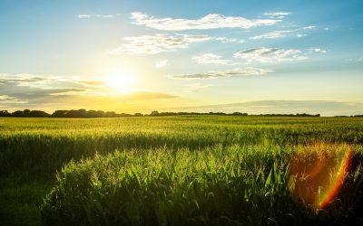 Iowa Corn Field Sunset Blue Sky