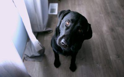 Question Dog Curious