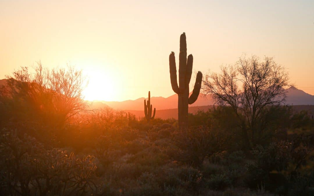 Desert Cactus Phoenix