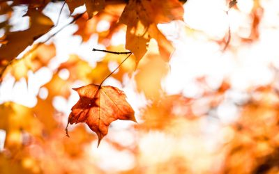 Fall Leaves Tree Orange