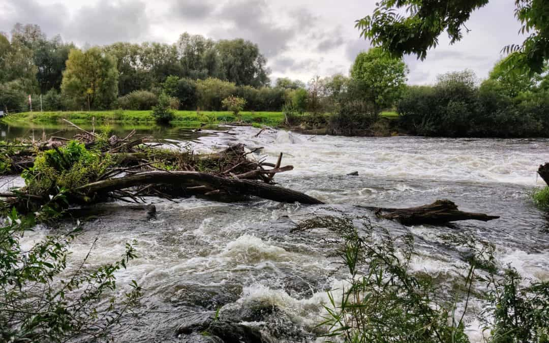 Flood Water Trees