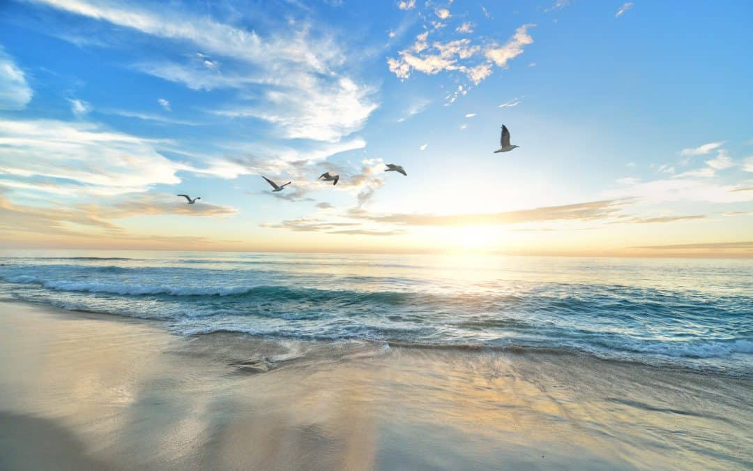 Ocean Sea Sun Clouds Seagull